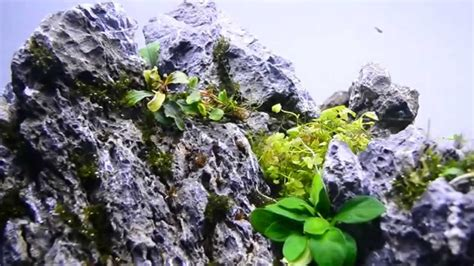 aquascaping stones aquascape seiryu stone youtube