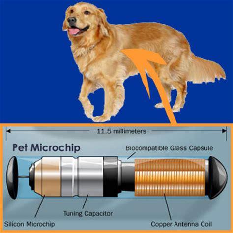 microchips for dogs littleton pet microchipping microchipping in littleton pet microchip implant