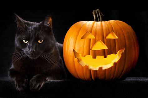 cat and pumpkin black cat pumpkin wallpaper
