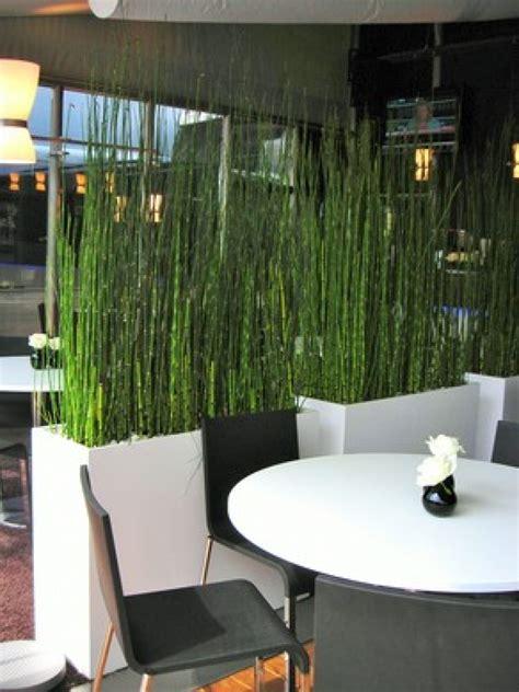 pflanzen raumteiler schachtelhalm equisetum wasserbambus in raumteiler