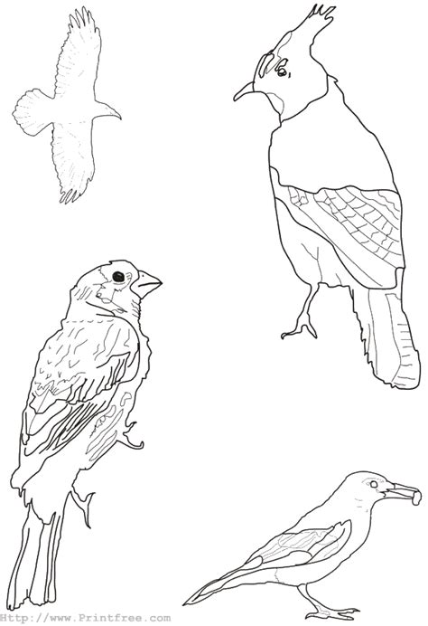 coloring pages of animals and birds birds