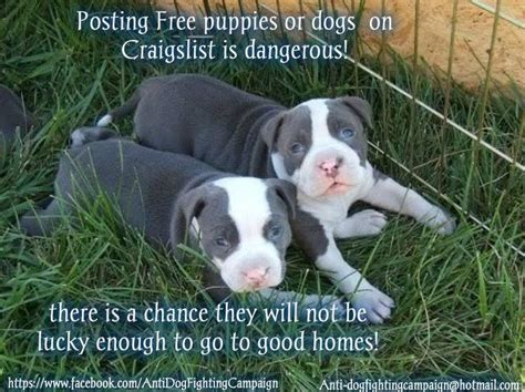 puppies on craigslist pin by peg b on words to live by