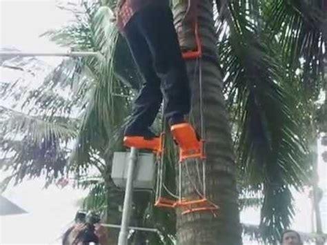 alat pemanjat pokok kelapa coconut climbing tool alat panjat pohon kelapa alpaka
