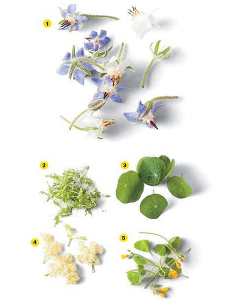 luxurious garnish edible flowers in food eat love savor the trendy food garnish is flowers and micro greens