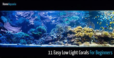 11 easy low light corals for beginners home aquaria