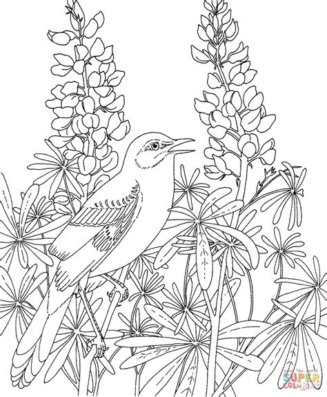 texas bird coloring page mockingbird and bluebonnet texas state bird and flower