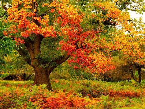 beautiful nature wallpapers beautiful trees my free wallpapers hub