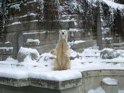 zoologischer garten ankunft www zoo wuppertal net zwei schmuseb 228 ren im zoo wuppertal