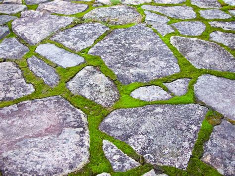 How To Clean Moss Patio by Moss And Patio For The Home