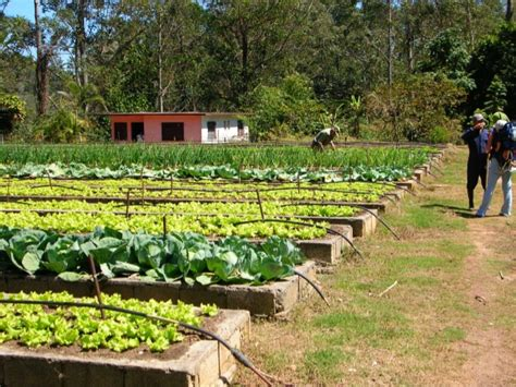 Making a Living Market Gardening on 1.5 Acres Presented by