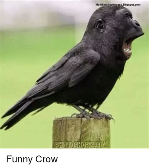 Crow Meme - 25 best memes about funny crow funny crow memes