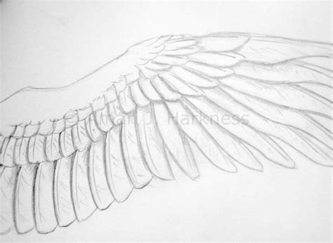 Drawing Wings sketching with reckless abandon drawing bird wings
