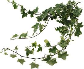 Tree Branch Home Decor by Ivy Google Search Sali Pinterest Ivy And Search