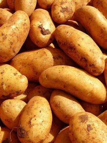 Wann Pflanze Ich Kartoffeln 4637 by Wann Kann Ich Meine Kartoffeln Ernten Immergr 252 N