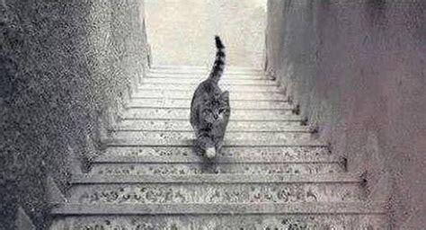 ilusiones opticas imagenes para pensar 5 ilusiones 243 pticas que te har 225 n cuestionar la realidad