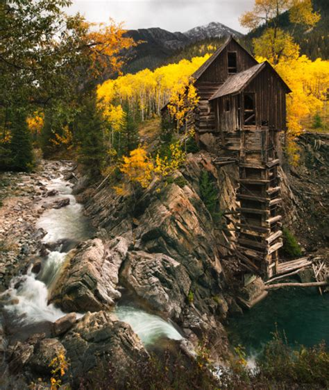 Forest House by Crystal Colorado