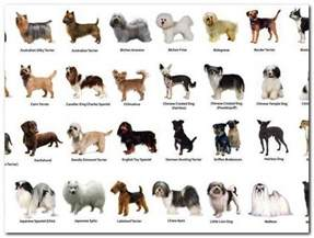 types of dogs com pictures to pin on pinterest pinsdaddy