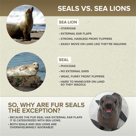 What Is The Difference Between Sealing And Expunging A Criminal Record Sea Vs Seal