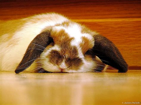 where do rabbits sleep bunny fight your fatigue strong inside out