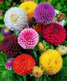 Pompon Rug صور لاجمل ازهار الربيع روعة منتديات مول نت