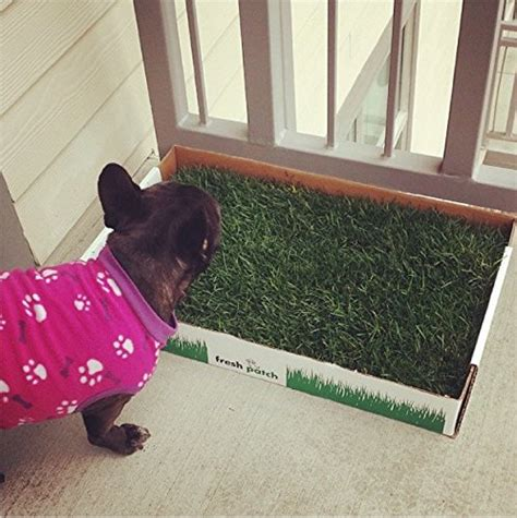 real grass potty fresh patch disposable potty with real grass as seen on import it all