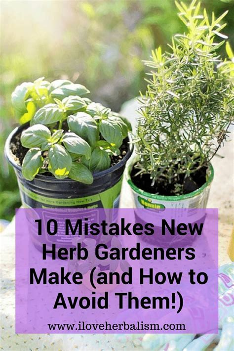 how to grow a herb garden in pots best 25 diy herb garden ideas on pinterest indoor herbs