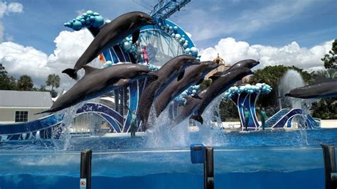 sea orlando seaworld orlando the ultimate experience must see places