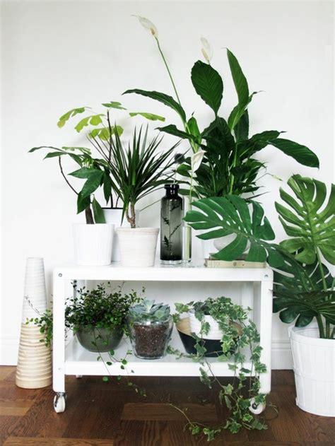 Schöne Pflegeleichte Zimmerpflanzen by Pflegeleichte Zimmerpflanzen F 252 R Anf 228 Nger Happy