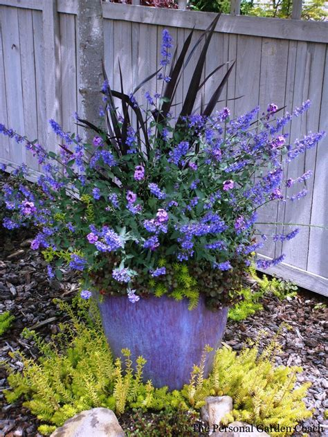 Pretty Combo Love It Container Gardening Pinterest Container Gardening Flowers