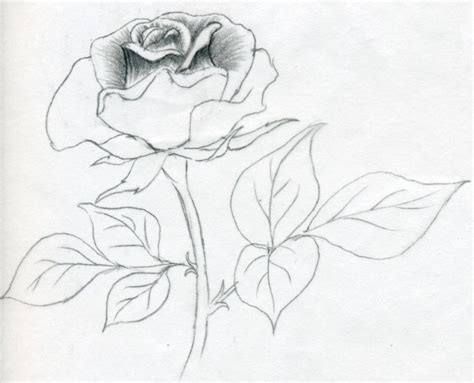 coloring pages of real roses free coloring pages of easy rose