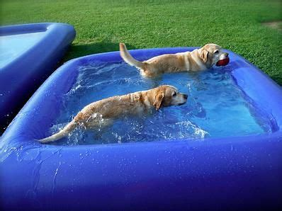 pools for dogs 17 best ideas about swimming pools on diy pool diy swimming pool and