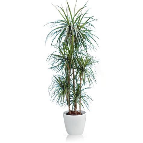 Pot Pour Plante Verte by Livraison Plante Verte D Int 233 Rieur Photos De Magnolisafleur