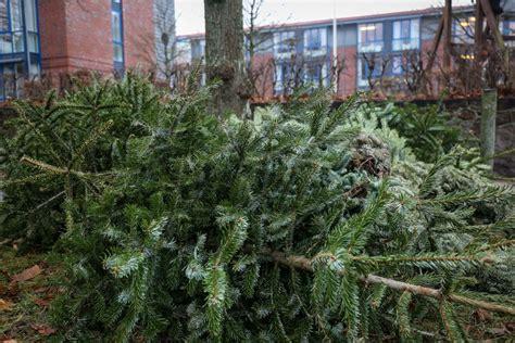 wohin mit dem alten tannenbaum www foerde news
