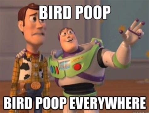 Pooping Memes - 14 best memes bird poop images on pinterest meme