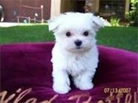 free puppies in hattiesburg ms dogs hattiesburg ms free classified ads