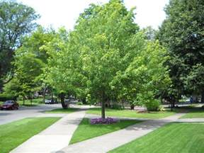 determine the right trees for your yard