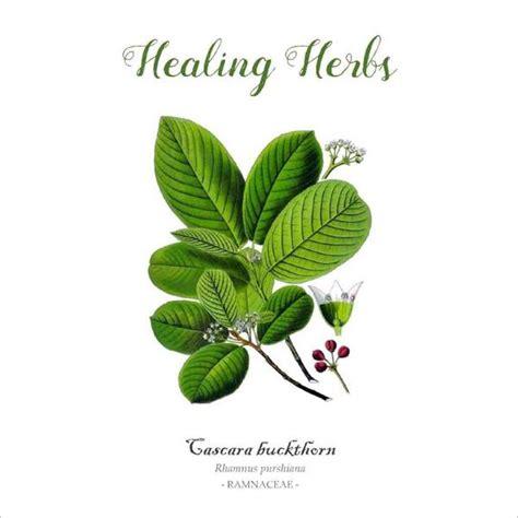 the unofficial outlander book of herbs books outlander inspired healing herbs box set muir design
