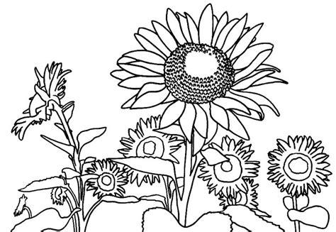 gratis gambar sketsa bunga gambar mewarnai