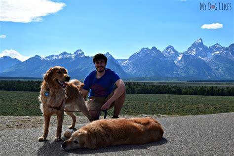 grand dogs visiting grand teton national park with dogs