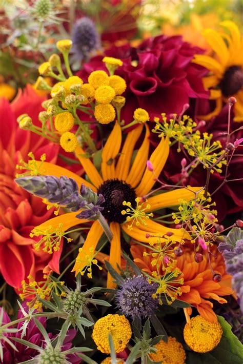 sunflowers barns autumn october