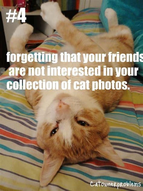 Cat Problems Meme - 17 best images about cat owner problems on pinterest