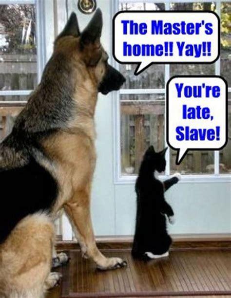 puppy vs vs cat jokes quotes