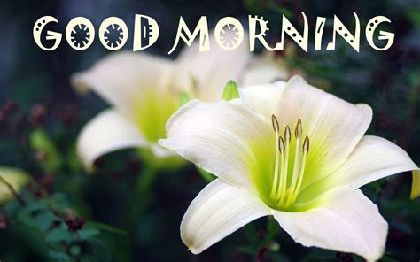 wallpaper flower good morning good morning hd image free 9to5animations com