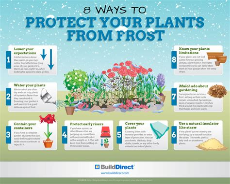 how to a to protect you protect your plants from an infographic assess myhome