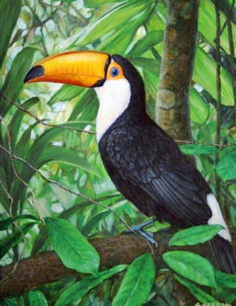 imagenes de otoño al oleo las 25 mejores ideas sobre aves tropicales en pinterest y
