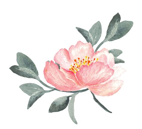 Peony Clipart 14 Cliparts For Free Peony Clipart Floral Print