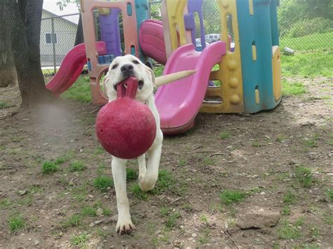 country comfort kennels country comfort kennels c for pets in street md