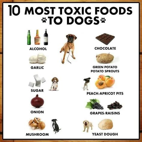 Diet Detox Symptoms Dogs by 67 Best Images About Things On