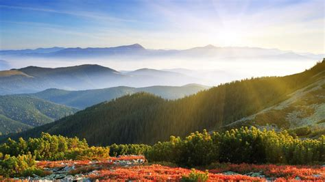 sunrise forest mountains wallpapers hd wallpapers id