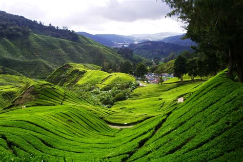stop befouling  cameron highlands clean malaysia